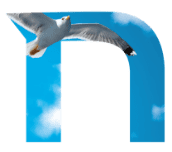 Art with netlex logo and a bird